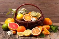 Сортированные цитрусовые фрукты Стоковое Изображение