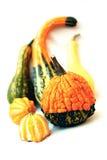 Сортированные Gourds осени Стоковые Изображения RF