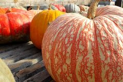 сортированные gourds Стоковое Изображение RF
