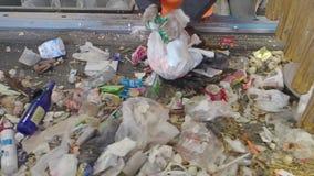 Сортировать отброса на транспортере завода утилизации отходов, Россия сток-видео