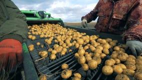 Сортировать процесс картошек и грязи держал 2 профессионалами сток-видео