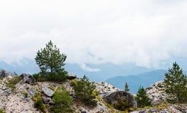 Сосенка в горах Стоковая Фотография