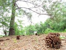 Сосенка в лесе стоковая фотография