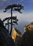 сосенка горы Стоковая Фотография RF
