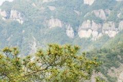 сосенка игл Стоковая Фотография RF