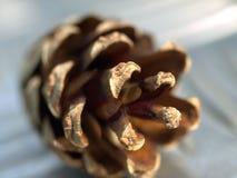 сосенка конуса Стоковое Фото