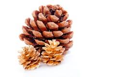 сосенка конуса nuts созрела Стоковые Фотографии RF