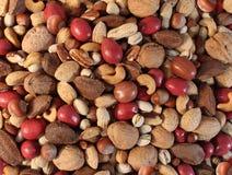 сосенка конца кедра анакардии предпосылки миндалины nuts вверх Стоковые Фотографии RF