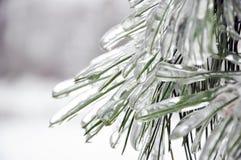 сосенка ледяных иголок крышки Стоковая Фотография RF