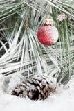 сосенка орнамента рождества ветви вися Стоковое Изображение