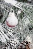 сосенка орнамента рождества ветви вися Стоковая Фотография RF