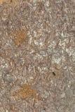 сосенка повреждения шашеней расшивы Стоковое фото RF