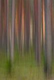 сосенка пущи Стоковое Фото