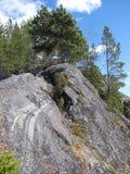 сосенка скалы Стоковые Фотографии RF