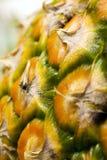 сосенка яблока Стоковая Фотография