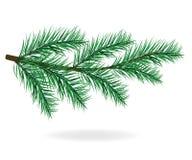 сосенка brampton Дерево Ветви сосенки иллюстрация штока