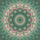 сосенка conelets женская плодовитая стоковые изображения