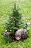 сосенка hedgehog вниз Стоковое Изображение RF