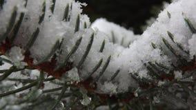 Сосенка Snowy Стоковая Фотография