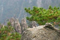 Сосенки горы стоковое фото rf