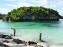 сосенки 1 острова Стоковое фото RF