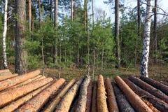 Сосна вносит дальше лес в журнал Стоковое Фото