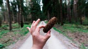Сосна в природе Стоковое Изображение RF