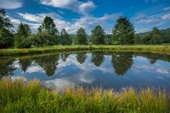 Сосна и выровнянный деревом пруд во время лета Стоковые Фотографии RF