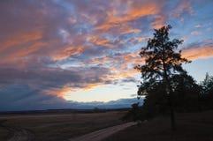 Сосна и красочный заход солнца Стоковые Изображения RF