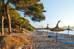 Сосна и песок приставают к берегу в свете восхода солнца, в Мальорке, Испания Стоковое Изображение