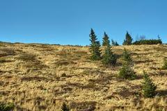 Сосна луга и горы в гигантских горах Стоковое Изображение