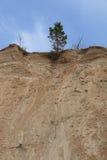 Сосна на верхней части Стоковое Изображение