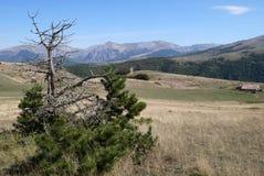 Сосна на верхней части Monte Moricone Стоковое фото RF