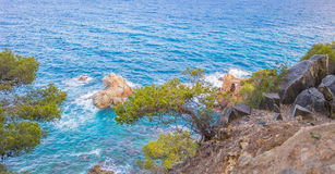 Сосна на крутом скалистом clifie, Испания Стоковое Фото