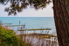 Сосна на предпосылке моря Стоковая Фотография
