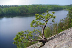 Сосна на скалистом береге озера ландшафта фокуса поля дня облаков сини небо выставки заводов движения должного польностью зеленог Стоковые Изображения RF