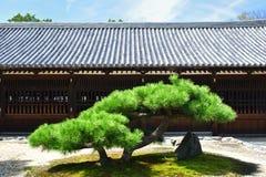 Сосна на японском саде ` s виска, Киото Японии Стоковые Фотографии RF
