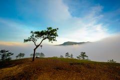 Сосна на hille Стоковая Фотография