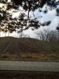 Сосна перед холмом стоковое фото rf