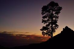 Сосна подсвеченная на наступлении ночи, Pilancones Стоковая Фотография