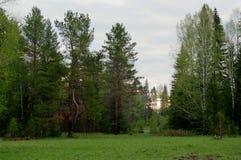 Сосна природы восхода солнца утра Стоковые Фотографии RF