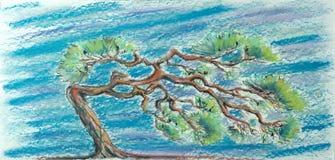 Сосна против пастелей моря Стоковая Фотография