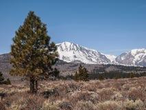 Сосна, снег покрытый ландшафт горы Стоковое Фото