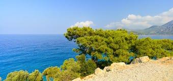 Сосна с плоской кроной растя на скале около моря, Турции стоковые фотографии rf