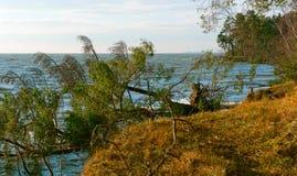 Сосна упала в пруд, деревья после шторма сломали и упали в озеро стоковое изображение rf