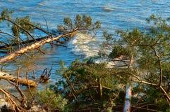 Сосна упала в пруд, деревья после шторма сломали и упали в озеро стоковые фото