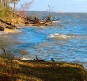 Сосна упала в пруд, деревья после шторма сломали и упали в озеро стоковая фотография rf