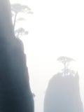 Сосна Huangshan в тумане Стоковая Фотография RF