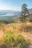 Сосна ponderosa заводов пустыни и взгляд Osoyoos от горы анархиста стоковое изображение rf