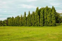 Сосновые леса Стоковое Изображение RF